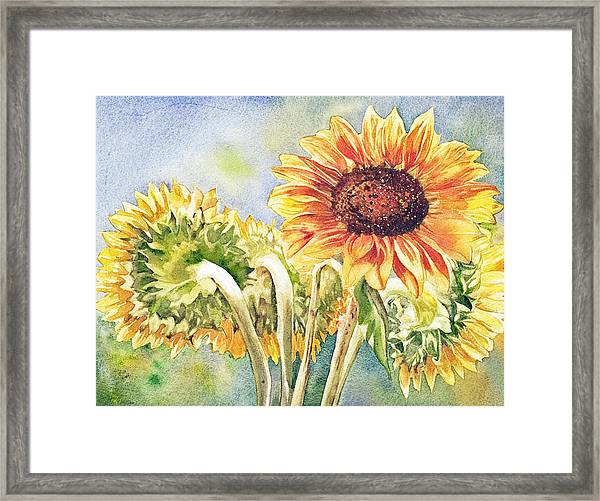 Suns All Around Framed Print