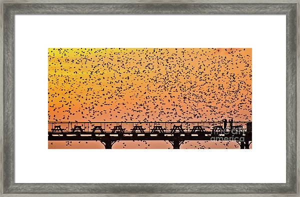 Sunset And Starlings In Aberystwyth Wales Framed Print
