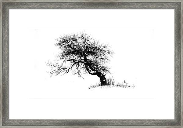 The Apple Tree Framed Print