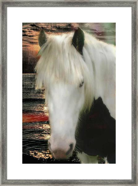 The Beautiful Face Of A Gypsy Vanner Horse Framed Print