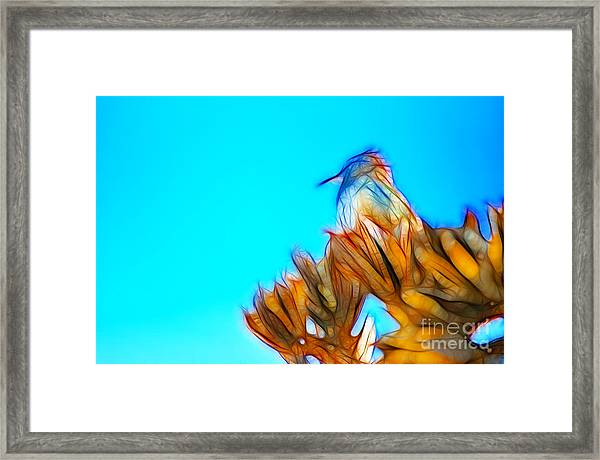 The Cactus Wren Framed Print