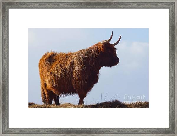 The Highland Cow Framed Print