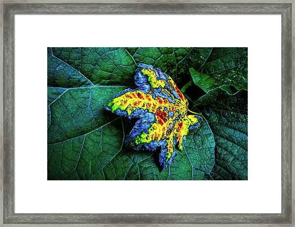 The Leaf Framed Print
