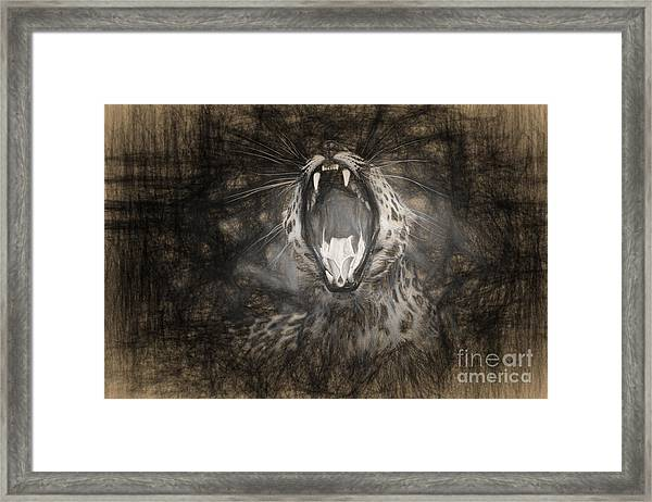 The Leopard's Tongue Rolling Roar IIi Framed Print