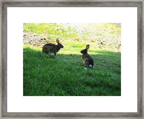 The Rabbit Dance Framed Print