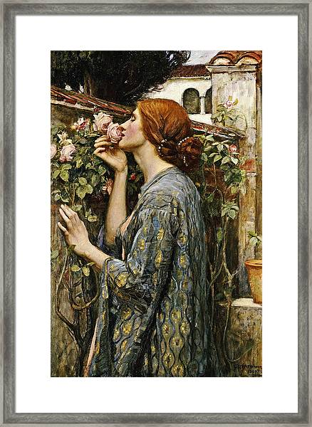 The Soul Of The Rose Framed Print