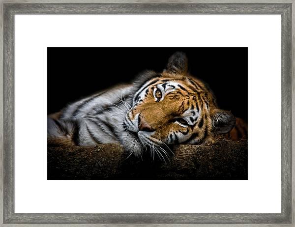 Tiger 2  Framed Print