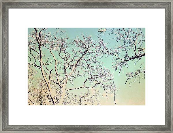 Tree Branches Reaching For Heaven Framed Print
