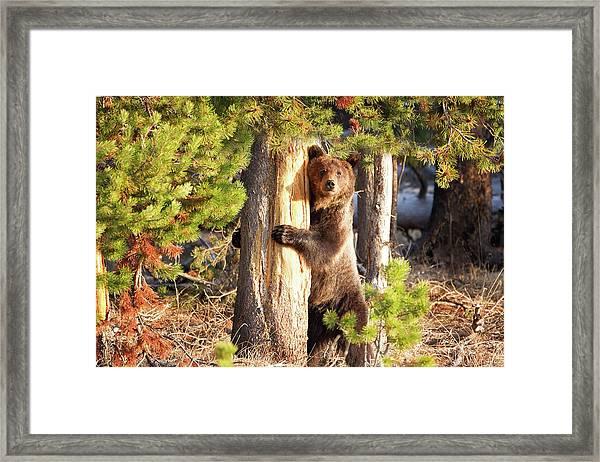 Tree Hugger Framed Print