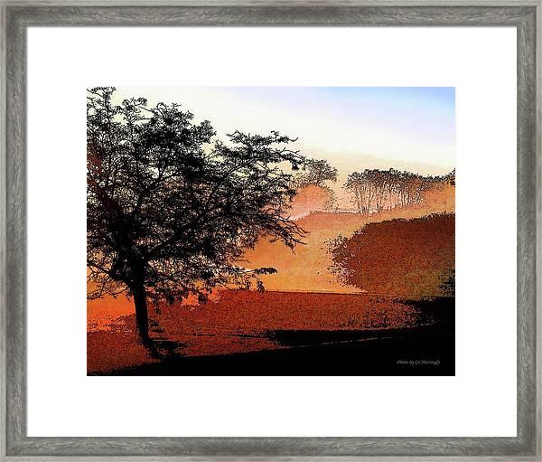 Tree In Morning Light Framed Print