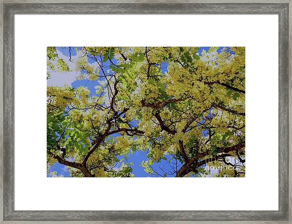 Trees And Flowers In Hawaii Framed Print by D Davila