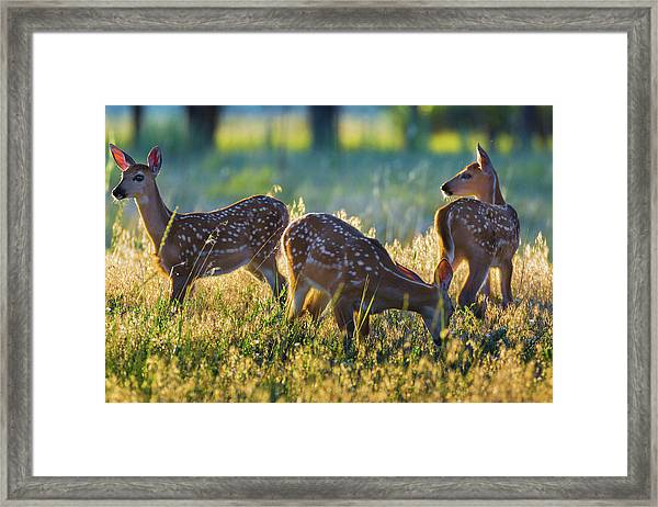 Framed Print featuring the photograph Triplets by John De Bord
