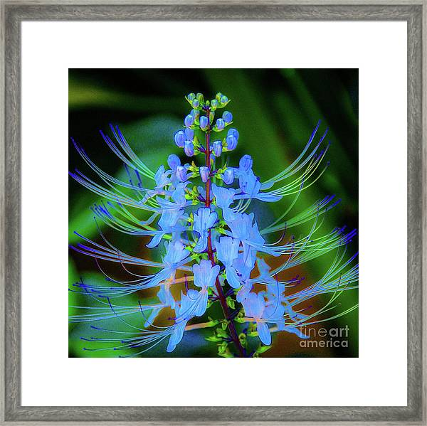 Tropical Plants And Flowers In Hawaii Framed Print