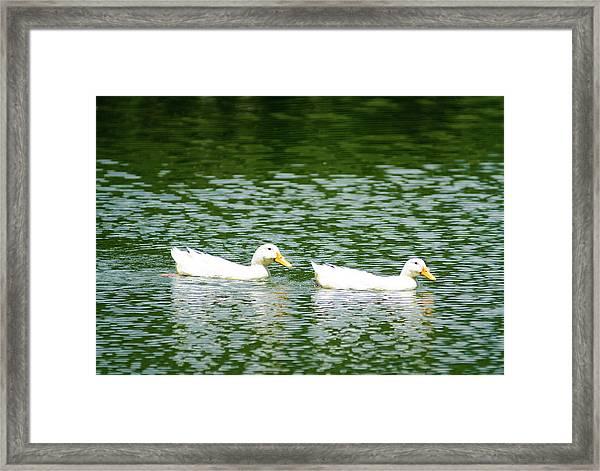 Two Ducks Framed Print