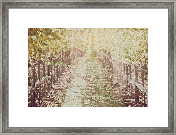 Vineyard In Autumn With Vintage Film Style Filter Framed Print