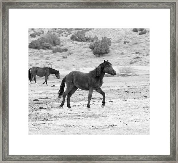 Virginia Range Mustangs Framed Print