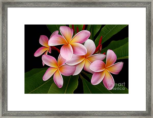 Wailua Sweet Love Framed Print