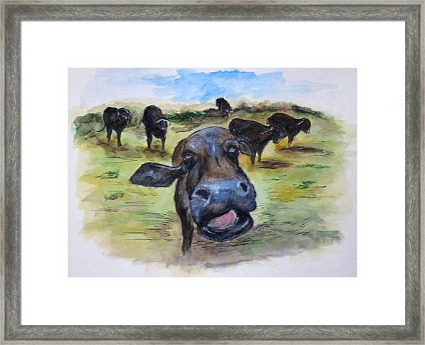 Water Buffalo Kiss Framed Print
