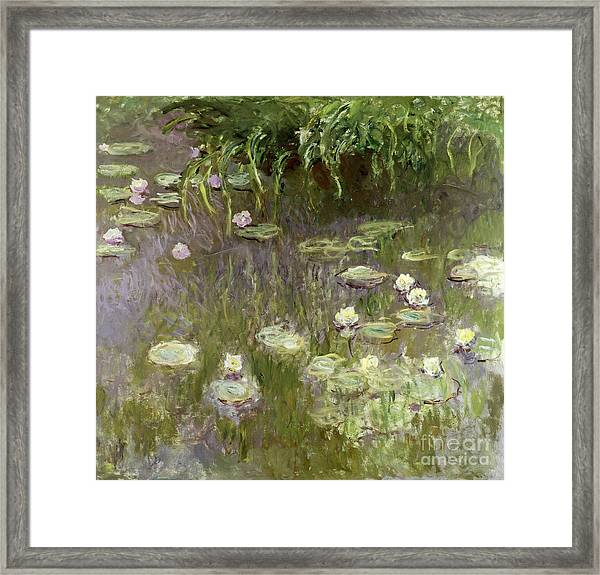 Waterlilies At Midday Framed Print