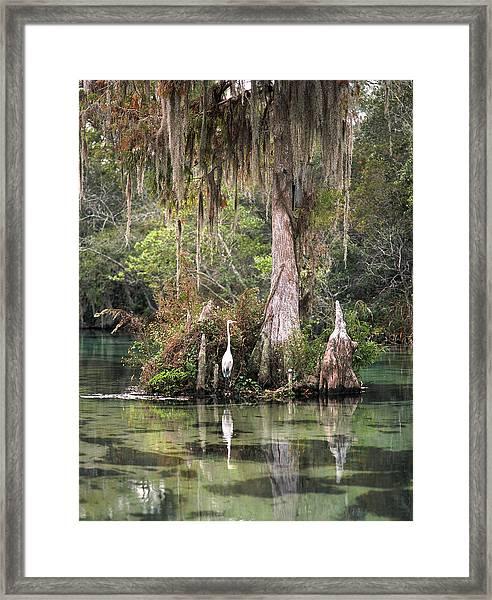 Weeki Wachee River Framed Print