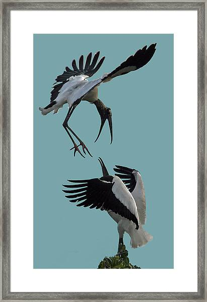Wood Stork Pair Framed Print