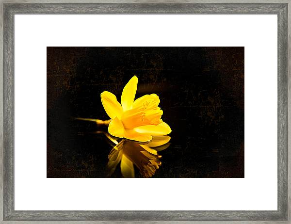Yellow Dreams Framed Print
