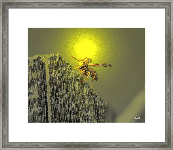 Yellow Jacket Blues Framed Print