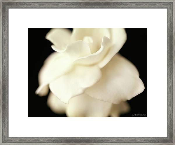 Gardenia Framed Print by Anne Geddes