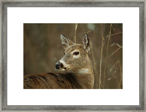 120310-10 Framed Print by Mike Davis
