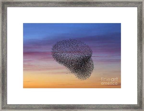 150501p260 Framed Print
