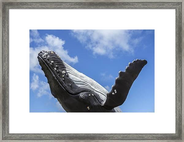 150729p196 Framed Print
