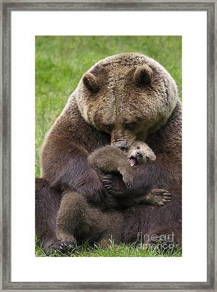 Mother Bear Cuddling Cub Framed Print