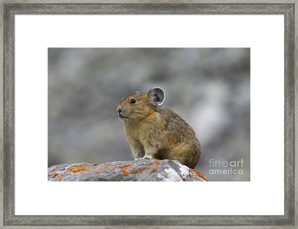151221p238 Framed Print