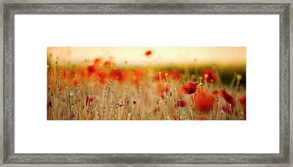 Summer Poppy Meadow Framed Print