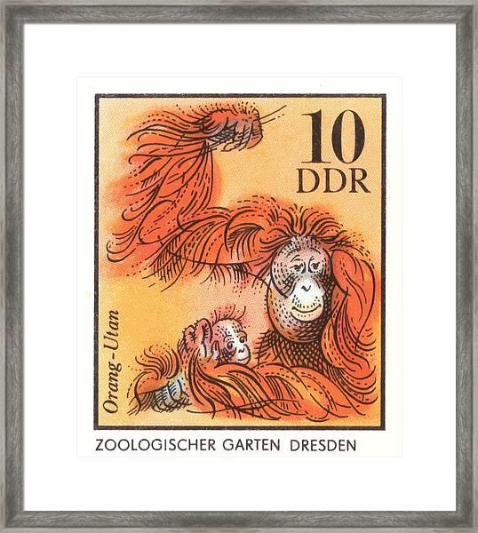 1975 East Germany Zoo Orangutan Postage Stamp Framed Print