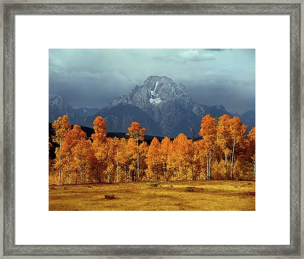 1m9235 Mt. Moran In Autumn Framed Print