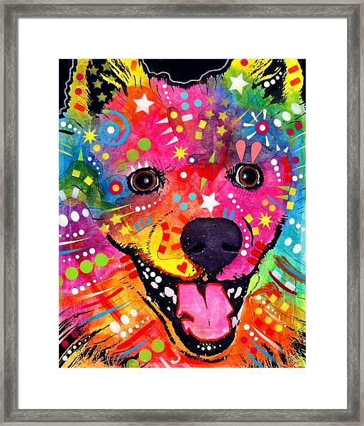 American Eskimo Dog Framed Print
