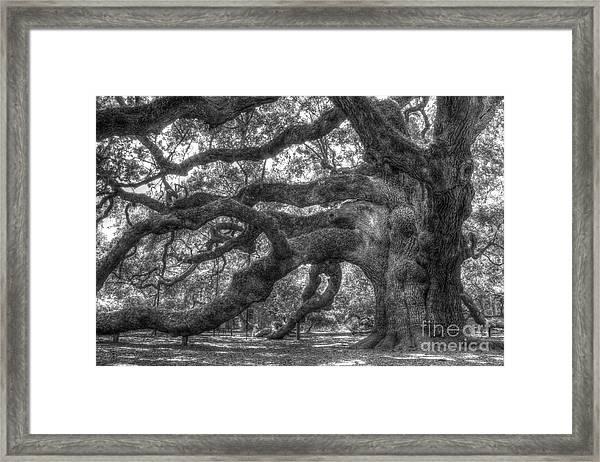 Angel Oak Tree Charleston Sc Framed Print