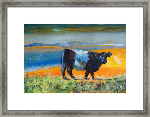 Belted Galloway Cow Framed Print