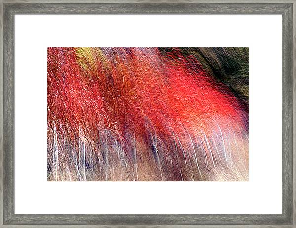 Clamour Framed Print by Robert Shahbazi