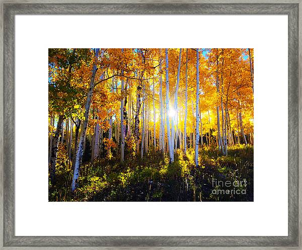 Framed Print featuring the photograph Colorado Autumn by Kate Avery