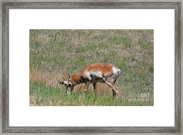 Deer Framed Print by Terry Runion