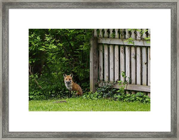 Kits 2012 Framed Print
