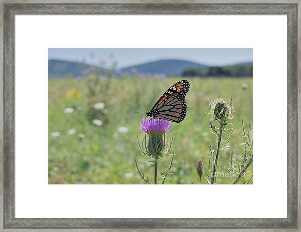 Mountain Meadow Monarch Framed Print