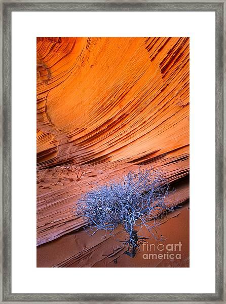 Juniper And Sandstone Framed Print