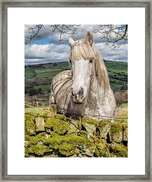 Framed Print featuring the photograph Rustic Horse by Nick Bywater