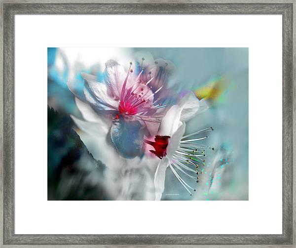 Viento De Primavera Framed Print