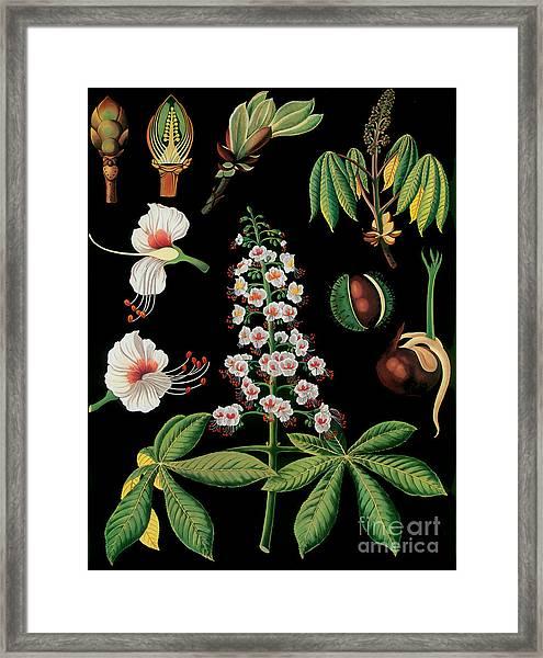 Vintage Botanical Framed Print
