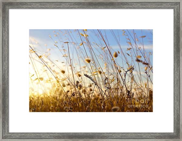 Wild Spikes Framed Print