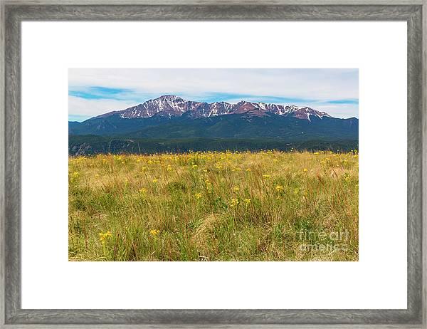 Wildflowers And Pikes Peak Framed Print